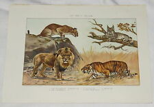 Cat Family Felidae Bookplate Antique Lion Tiger Lynx Puma