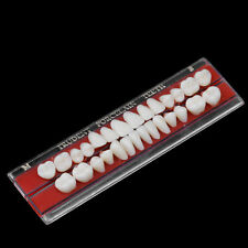 Alloy Pin Porcelain Tooth Dental Materials Colors Shade Guide Upper Teeth 22#