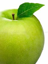 PHOTOGRAPHY COMPOSITION FOOD FRUIT APPLE GREEN LEAF MACRO PRINT POSTER MP3387A