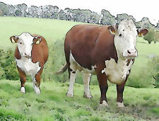 Hereford  bull cow and calf  Art Painting Watercolor Print by Ed Mace