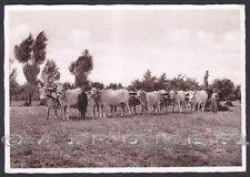 FERRARA CENTO ? AZIENDA AGRICOLA RAVEDA - BUOI - ASSICURAZIONI GENERALI 1940