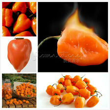 20 Orange Peppers  Seeds Popular houseplants Annual TT315