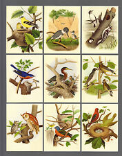 CIGARETTE/TRADE/CARDS.GDS Cards. BIRDS OF THE UNITED STATES.(2007). (Set of 20).