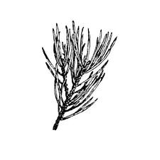 PINE BRANCH unmounted rubber stamp #19