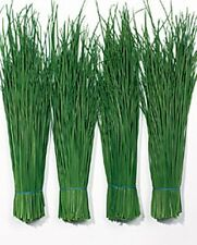 Herb Seeds - Chives Fine Leaved - 800 Seeds