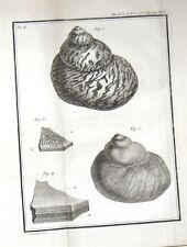 1766 Histoire De L'Academie Royale Des Sciences 15 ENGRAVINGS SHELLS MINING &c.