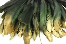 "50+ BLACK GOLD TIP IRIDESCENT ROOSTER COQUE TAIL FEATHER 6""L-8""L"