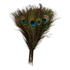 Pack of 25pc Natural Peacock Feathers 10-12'' L6