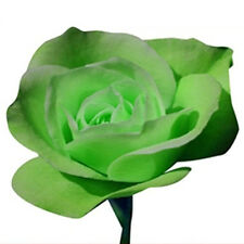100pcs Romantic Rose Flower Seeds Garden Plants Seeds Gift for Lover Green