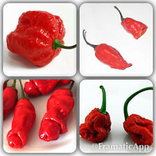 Mixed Chilli 100 Seeds Scorpion Carolina  Reaper Jolokia Pepper BUY 2 GET 1 FREE