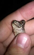 Taxidermy TWO HEADED SNAKE 100% real deformed specimen reptile oddity RARE