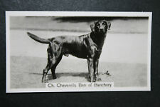 Labrador Retriever   Champion   1930's Vintage Photo Card  VGC