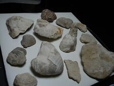 Lot Of Kansas Found Fossil Stone Shells And Coral As Pictured 198 Grams Total
