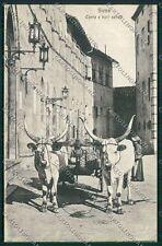 Siena Città Costumi Carro Buoi cartolina QQ1753