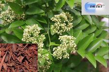 Dalbergia Wood jiang xiang  Lignum Dalbergiae Odoriferae 100g dry herb