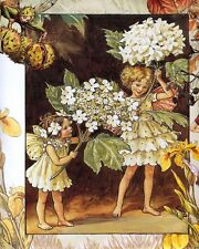 CICELY MARY BARKER THE GUELDER ROSE FAIRY 8X10 FINE ART PRINT 5508