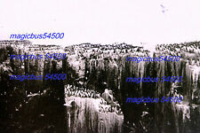 15 x PLAQUES PHOTO ENGLAND YORKSHIRE (?) 1907 Colonies MACAREUX Puffins Colony