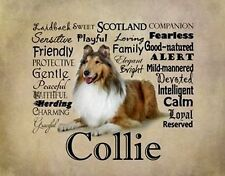 "Collie Rough,Sable w Characteristics. One 16"" fabric panel to sew.Pic is 8""x11""."