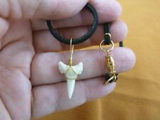 "(S16-N) 13/16"" Oceanic White Tip SHARK Lower Tooth GOLD wired pendant modern"