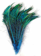 "50 Pcs DYED PEACOCK SWORDS - TURQUOISE 10-15"" Feathers; Costume/Hats/Bridal/Pads"