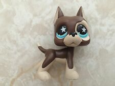 Littlest Pet Shop RARE Great Dane Dog Puppy #817 STAR Chocolate Blue Tan LPS