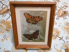 Lizars SC Butterflies Framed Foil Art Print Spectra Galleries
