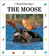 The Moose: Gentle Giant (Animal Close-Ups)