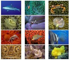 12 Blank Note Cards, Under Water Aquatic Theme, 5 x 7 with Envelopes