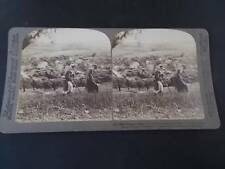 Vtg Antique Victorian Stereoview Photograph Bethany Judaica Palestine Jerusalem