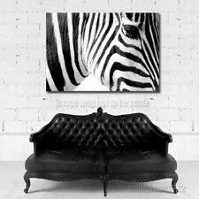 Modern Zebra Oil Painting Canvas Print Black and White Home Decor 24X16 No Frame