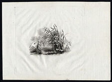 Antique Design Print-CAT'S TAIL-WATER-LAKE-NATURE-PLANT-1780