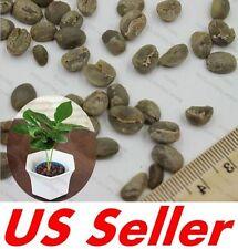15 PCS Coffea Arabica Seeds E35, Coffea Arabica Nana, Grow Your Own Coffee Tree