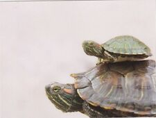 """*Postcard-""""Mother Turtle & Baby Turtle...on its' Back...  (B-213)"""