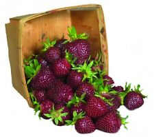 Strawberry Seeds - PURPLE WONDER - Extra Sweet Fruit - GMO FREE - 25 Seeds
