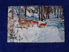 CHAPLEAU ONTARIO CANADA POSTCARD TOURIST AND HUNTERS PARADISE DEER IN THE WOODS