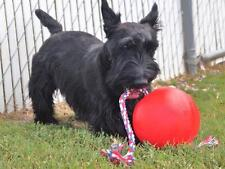 """TUGG-O Dog Toy Water Weighted Tug-O-War Mini 7"""" Red Ball w/ 4' Rope Durable"""