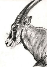 Oryx African Antelope aceo EBSQ Kim Loberg wildlife Mini Art Charcoal Animal