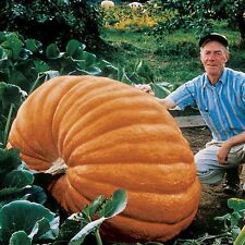 ZUCCA-Dills Atlantic Gigante - 10 Semi Freschi-World Record Holder