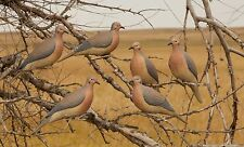 6 Pack Avery Greenhead Gear Clip On Dove Decoys Mourning Doves 1/2 Dozen