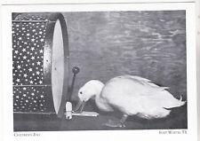 """*Postcard-""""Desmond The Duck @ Children's Zoo"""" @ Forest Park @ Fort Worth Tx(#96)"""