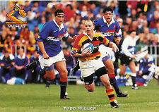 Todd Miller, Waikato RUGBY PLAYER POSTCARD
