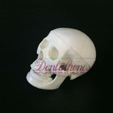 Mini Skull Human Anatomical Anatomy Head Medical Model Convenient to carry