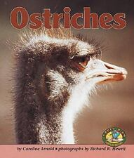 Ostriches (Early Bird Nature)