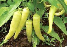 SWEET BANANA PEPPER 20 seed Heirloom Vegetable Seeds