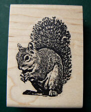 Squirrel rubber stamp Q2