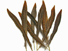 """10 Pieces - 4-6"""" Natural Golden Pheasant Tail Feathers"""