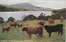 Highland Cattle, STRATHTUMMEL, Perthshire