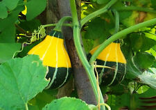 10 Small Fruit Bottle Gourd Seeds Lagenaria Siceraria Organic Vegetables