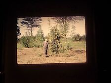 35 mm slide 1964 Marijuana farm Plant Harvest Africa Congo Huge Big Large field
