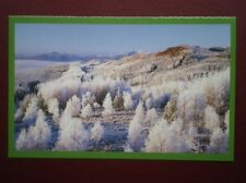 POSTCARD INVERNESS-SHIRE FROSTED BIRCHES - GLEN GARRY
